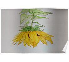 Lori's Sunflower Poster