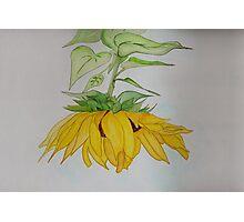 Lori's Sunflower Photographic Print