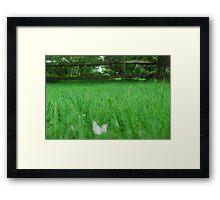 Blades of Grass Framed Print