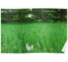 Blades of Grass Poster