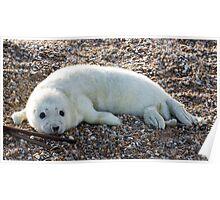 Seal Pup 4 Poster
