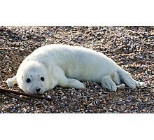 Seal Pup 4 Photographic Print