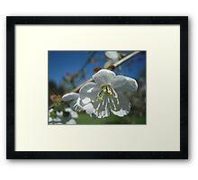 Spring Time Blossoms Framed Print