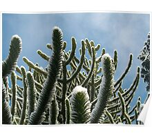 Snow Monkey Tails Poster