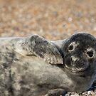 Seal by Ellesscee