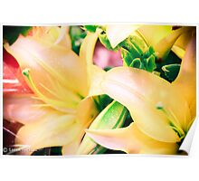 Pretty Lilly Poster