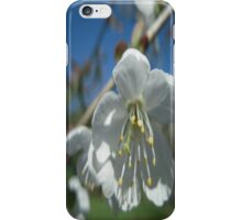 Spring Time Blossoms iPhone Case/Skin