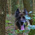 German Shepherd in the woods watching by Jan Carlton