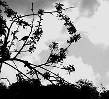 Spring by khaoskailogos