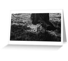 WITCH HARE Greeting Card