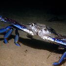 Blue Swimmer Crab by Erik Schlogl