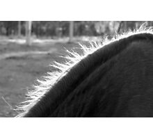 Mane Delight :) Photographic Print