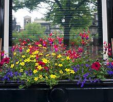 Windowbox- Amsterdam by mypic