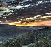 Forest Sunrise by David Tinsley