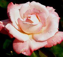 Dewy pink rose by ♥⊱ B. Randi Bailey