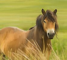 Oil Painted Exmoor Pony by Moonlake