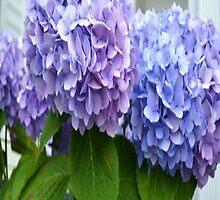 blue & purple flowers by lyssuhhh