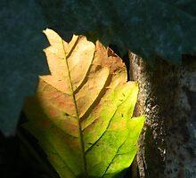 Light And Dark by VixenFirepaw