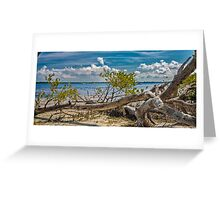 Tree on the Beach Greeting Card