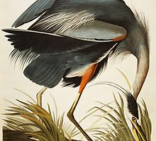 Great Blue Heron by Audubon by Bridgeman Art Library