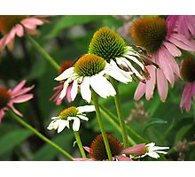 Summer garden Photographic Print