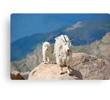 Mother and Baby Goat Canvas Print