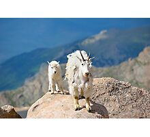 Mother and Baby Goat Photographic Print
