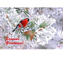 For a Wonderful Season's Greetings !  Photographic Print