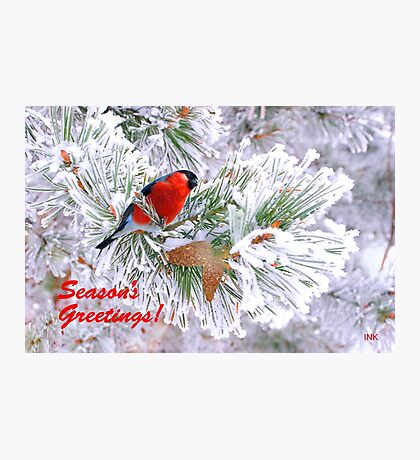 For a Wonderful Season's Greetings !  Photographic Print