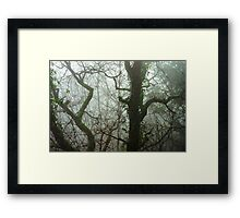 Winter tree silhouette in great fog, nature concept Framed Print
