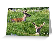Boys in the Grass Greeting Card