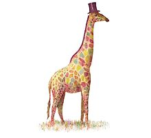 Fashionable Giraffe Photographic Print