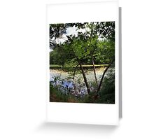 Swamp Water Goodness Greeting Card