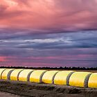 cotton bails on sunset by outbacksnaps