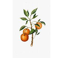Orange Tree  Photographic Print