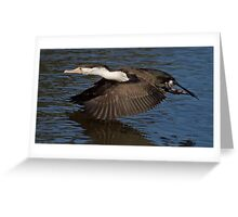 Pied Cormorant Above Water Greeting Card