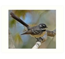 Grey Fantail with Bokeh Art Print