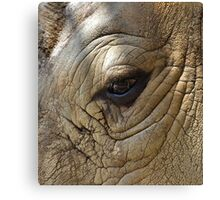 Eye Of The Rhino Canvas Print