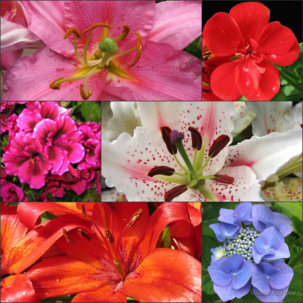 Summer Beauties Floral Collage by BlueMoonRose
