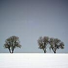Winter Trees Skyline 3 by eatsleepdesign