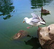 Seagull First Step by David Denny