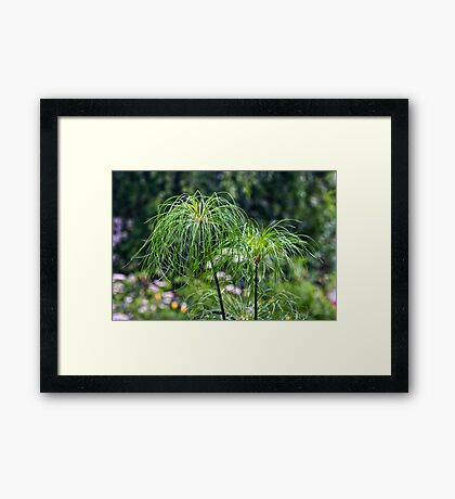 """The Plant Label Says I Am """"Papyrus"""" Framed Print"""