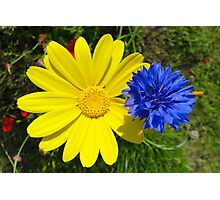 Cornflower and Corn Marigold Photographic Print