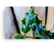 green holly leaf Canvas Print