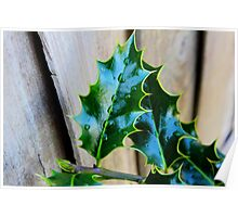 green holly leaf Poster