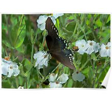 Pocono Butterfly Poster