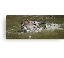 The Washing Goose Canvas Print