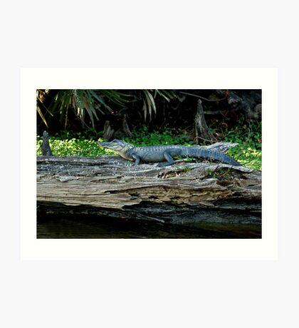 gator boy Art Print