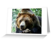 Grizzly Bear in the Colorado Rockies summer shade Greeting Card