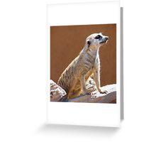 Meerkat posing in the Sun Greeting Card